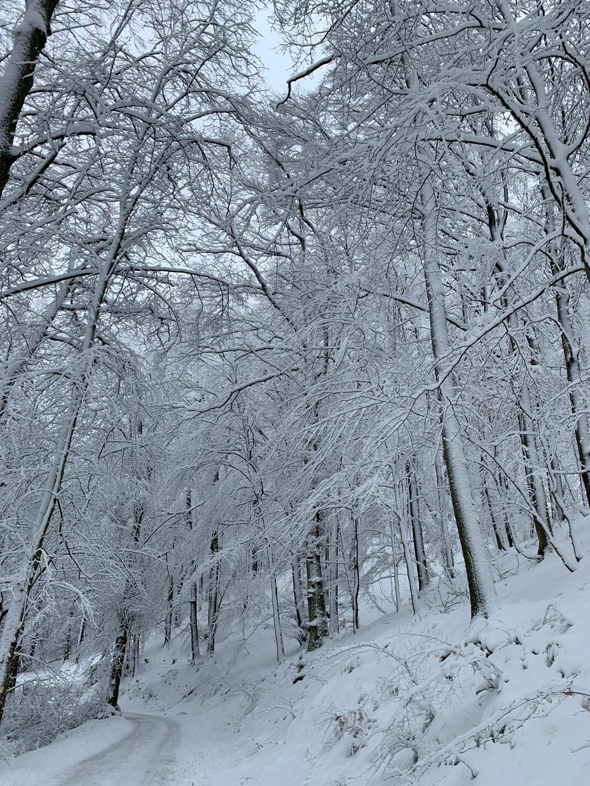 Schnee im Januar: Foto des Monats
